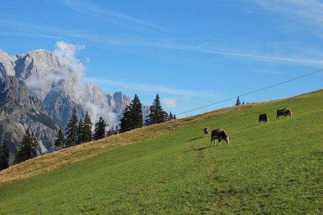 """Typical """"Alm,"""" the high Alpine pasture"""