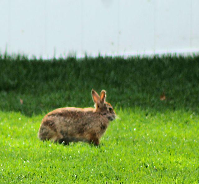 EasterBunny